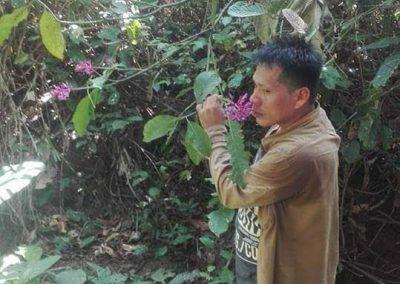 Flowers - Center Peru
